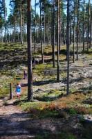 Vandring i skogen.
